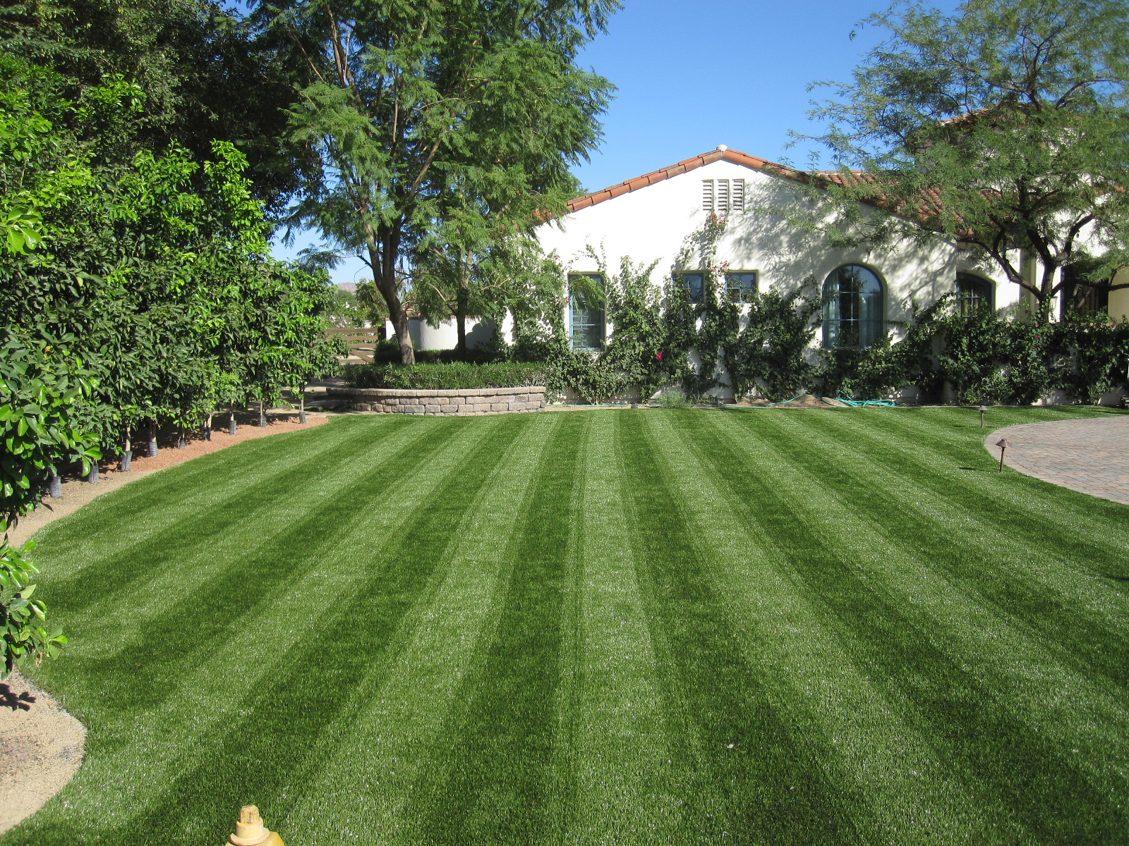 artificial turf yard. Delighful Yard Yes This Is Synthetic Grass With Artificial Turf Yard C