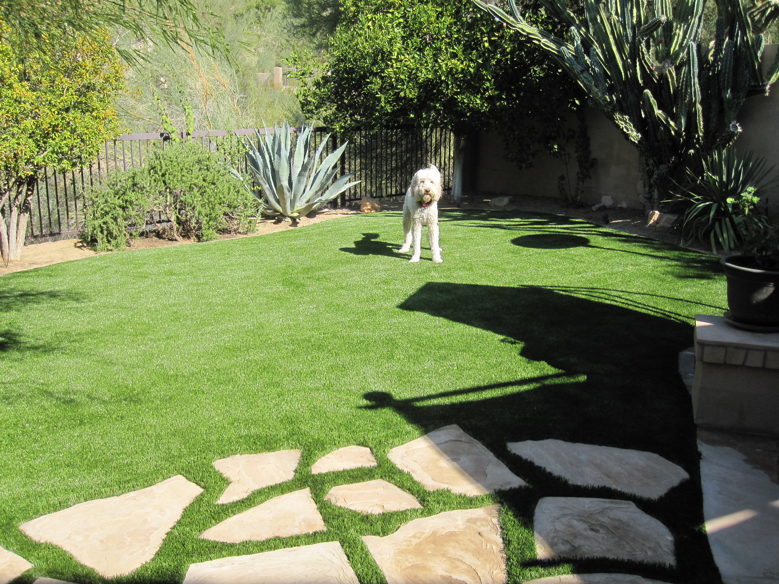 Incroyable Dogs Love Turf Lawns. So Will You!